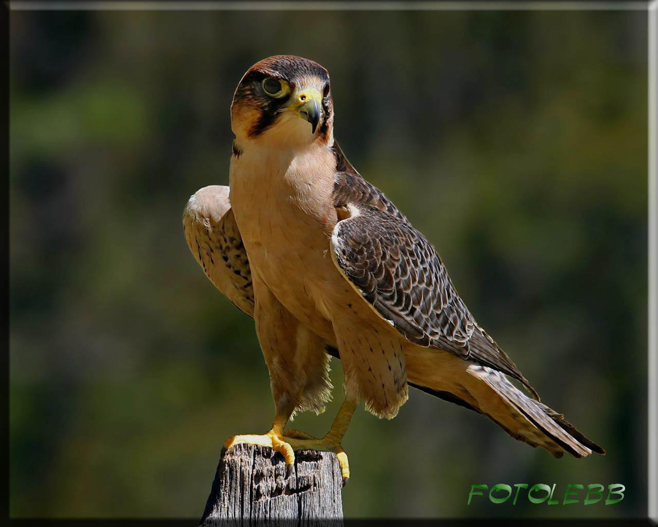 Птицы красивые картинки